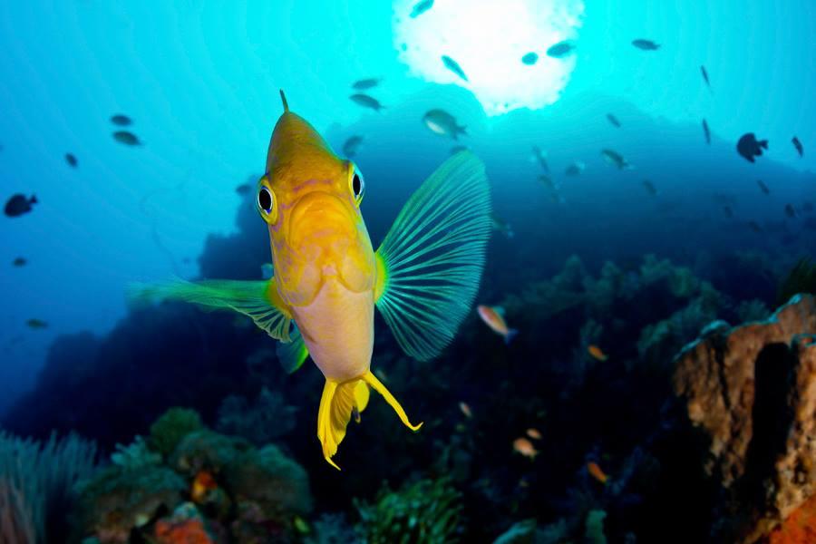 Les meilleurs spots de plongée Amed Bali