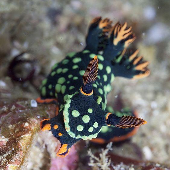 Spot Plongée Bali : vaut-il mieux plonger à Bali ou à Komodo?